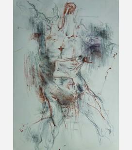 Anatomia herida